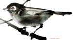 small sumie class image_bird_ FYoshikawa 2
